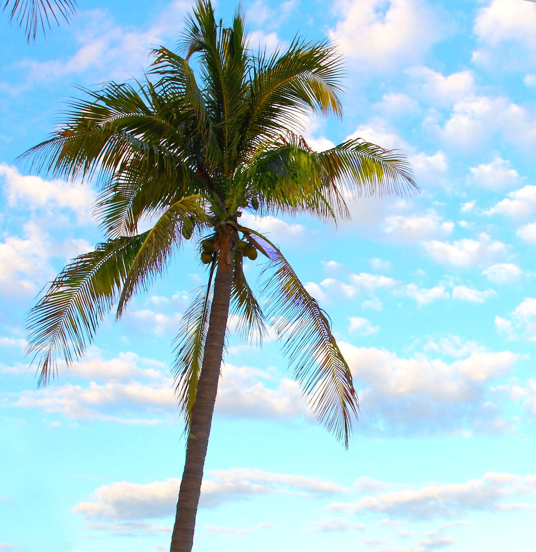 Palm Tree Beach: Luxury Florida Keys Resorts > Tranquility Bay