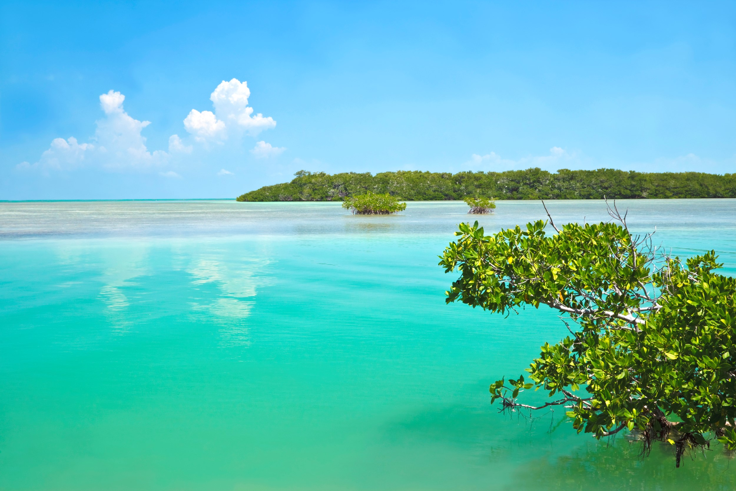 Turquoise waters and mangrove
